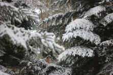 Sniego tekstūra