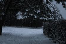 Žiemos simetrija (3)