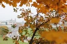 Į rudeninį Vilnių (1)