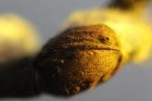 Pumpuras: Saulės atokaitoje