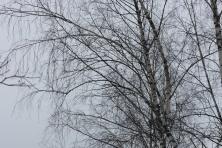 Šalia miško