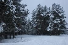Žiemos simetrija (4)