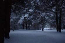Žiemos simetrija (1)