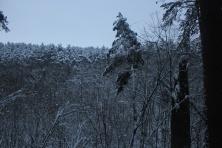 Žiemos simetrija (6)