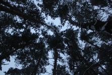 Žiemos simetrija (5)
