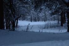 Žiemos simetrija (2)