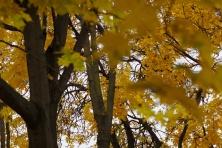 Į rudeninį Vilnių (3)