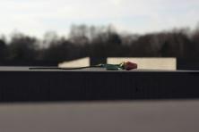 Gėlė ant akmens
